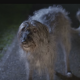 Трогательная реклама о брошенных животных