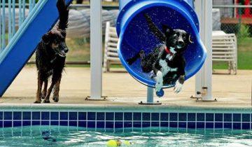 Собаке очень понравилась водная горка
