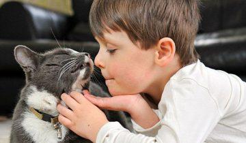 Кошка встретилась с мальчиком, которого давно не видела