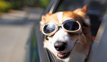 Кошки и собаки впервые в машине