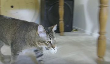 Симулятор охоты для кошек – возможность держать своих питомцев в форме!