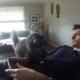 Кот решил отучить хозяина от видеоигр