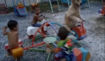Пес катается на карусели