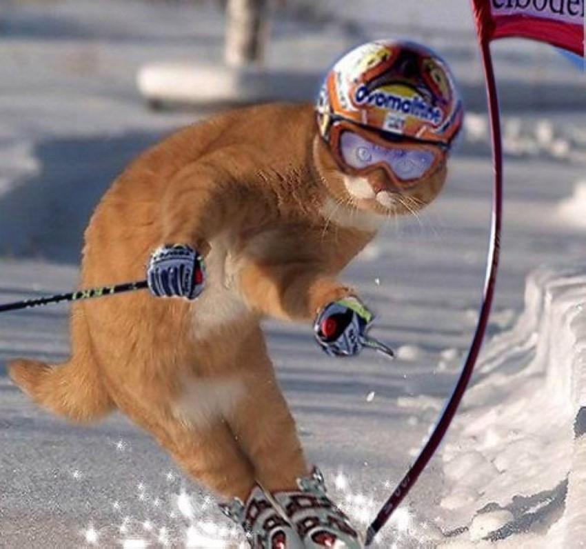 Котята даром фото ангарск российский