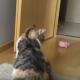 Пес хочет поиграть с кошкой, но Мурка не в настроении!