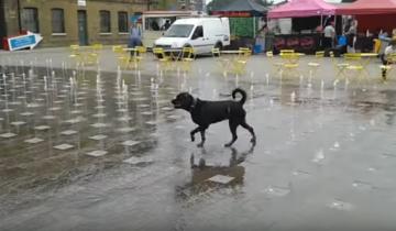 Собака, которая играет у фонтана