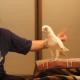 Я просто в восторге от того, как танцует этот попугай!