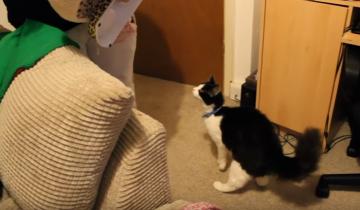 Корги подружилась с кошкой