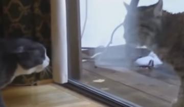 Как поведет себя кот, когда к нему подойдет рысь?