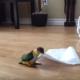 Попугай нашел себе игрушку