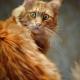 Кошка знакомится со своим хвостом