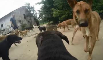 В этом приюте более 450 собак!