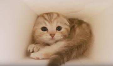 Что этот милаха делает в коробке?
