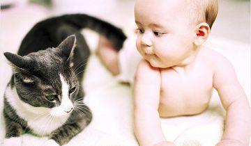 У этой кошки может поучиться каждая няня!
