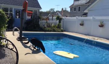 Что делать, когда мячик упал в воду? Мастер-класс от Эбби
