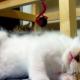 Котенок променял игру на сон