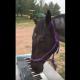 Лошадь учится играть на синтезаторе