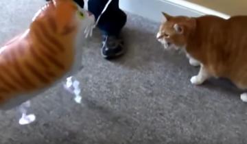 Кошки против шариков