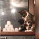 Почему коты сбрасывают вещи со стола?