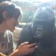 Парень показывает горилле фото ее сородича