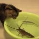 Коты на рыбалке, или чем закончится рыбалка в тазике?