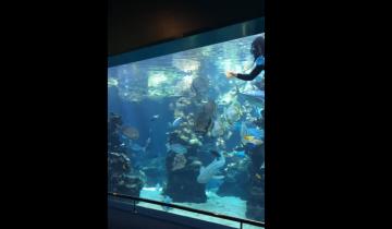 Он мыл аквариум, как вдруг подплыла акула