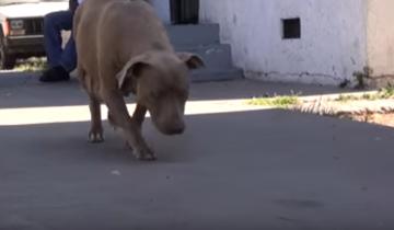 Она решила покормить бездомную собаку, но такого не ожидала!