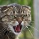 Когда кошкам нечего делать