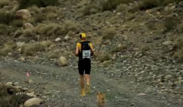 Собака пробежала около 70 миль, чтобы доказать свою верность хозяину