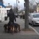 Его часто встречают на улице в окружении 15 собак
