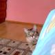 Кот просто выглядывал из-за дивана, но то, что произошло, поражает