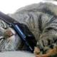Кот отвечает на телефонный звонок