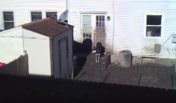 Этот пес все время проводит на скучном, заднем дворе