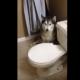 Сердитый хаски не хочет принимать ванну