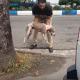Он просто не мог проехать мимо этой собаки!