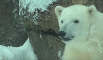 Выпал первый снег. Вы посмотрите, как ему рады обитатели зоопарка!