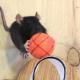 Трюки в исполнении мышей