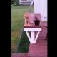 Кот сидит, как человек