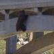 Беднягу напугали машины, и он оказался под мостом