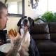 Собака просит еду!
