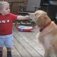 Малыш делится с собакой едой