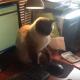 Кот не подпускает хозяина к мышке