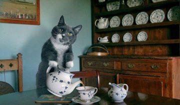 Этот кот – настоящий шеф