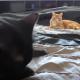 Как кошки помогали хозяину убирать постель