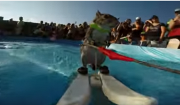 Белка демонстрирует свое умение кататься на водных лыжах