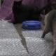 Кошки играют с пузырчатой пленкой
