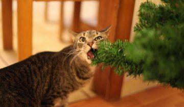 Мне кажется, или эти кошки хотят испортить Новый год