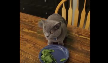 Кот не любит кушать овощи