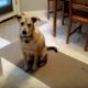 Пес радуется еде