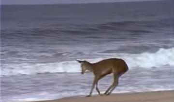 Спокойная пробежка по волнующемуся морю